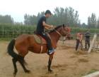 广州哪里租皇家马车 广州哪里租马 广州哪里有真马匹出租