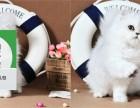 天津哪里卖金吉拉 天津哪里有宠物店 天津哪里卖宠物猫便宜