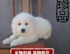 可爱的大白熊 冷酷的外表 温柔的内心最忠诚的家庭