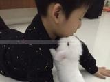 急转宠物兔+笼子