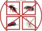 西安灭蟑螂 除蟑螂,专项服务