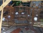 八哥 鹩哥鸟养殖与销售