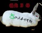 养殖八点黑肉兔怎样才能赚到钱?
