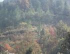 四川省巴中市380亩林地出租