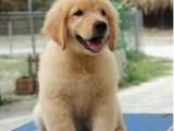 正规狗场直销多个品种 保证纯种健康 价格优惠 可签 协议