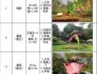 景区仿真昆虫模型道具现货出租低价出售