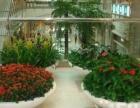 专业绿植花卉租赁植物租摆、绿化养护开荒除草、绿植墙