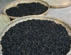 菊花桑叶茶-高原生态农业网上商加盟 种植养殖