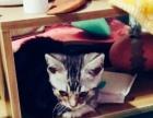 求收养这个可爱又粘人的小猫咪