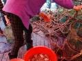 宁波奉化莼湖栖凤海上人间坐船出海捕鱼吃海鲜一日游