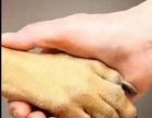 潍坊宠物医院(潍坊佳友宠物、24小时营业的医院)
