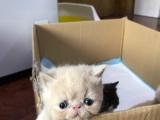 超级可爱的加菲宝宝找新家