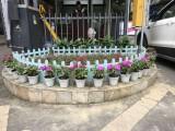 成都恒大房产PVC草地栏杆 护花塑钢栏杆