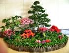 苏州绿植租赁 花卉租摆 办公室盆景