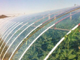 抢手的山东PO膜,利丰塑料提供青海蔬菜包装膜厂家