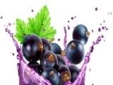 藍莓野果汁白酒 藍莓野果汁白酒誠邀加盟