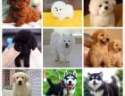 惠州狗场解散 阿拉斯加犬等二十多种宠物狗 300元 起售