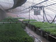 温室大棚全自动双轨调速遥控喷灌机水车育苗喷灌机价格