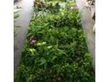 供应高档仿真绿植墙室内假植物装饰墙人造背景墙五色草造型设计