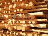 唐海松木杆竹木杆