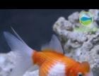 白塔水族馆可出租零售各类鱼缸
