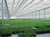 滨州草莓棚1寸管子一亩地造价8000元