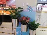 大兴绿植租赁花卉租摆免费上门设计