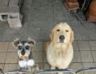 派得犬粮比淘宝更便宜。