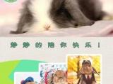 长期出售宠物兔(垂耳兔)价格低、品种优