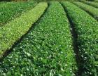 蔬菜水果 米面粮油 专业配送 天津蔬菜配送