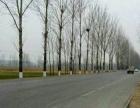 转让平邑郑城镇 养殖厂 4000平米