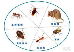 衡阳常宁灭鼠公司专业长期灭老鼠灭蟑螂