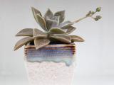 新款多肉植物小花盆 ZAKKA迷你花盆 多肉盆栽 小花瓶 陶瓷花盆