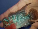 观赏鱼 热带鱼 ,鱼缸专卖