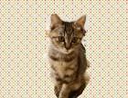 换工作了太忙,没空照顾小猫,三个多月,原价转让送猫砂