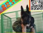 德牧——CKU犬舍 实物拍摄终身质保签属协议