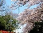 不允许失败的日本留学