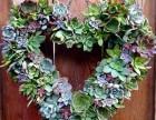 成都绿植租售,花园搭建,立体植物景观 绿植墙,,园林绿化工程