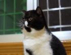 加菲猫宝宝寻新家长