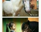 小骑士马术骑马主题冬令营