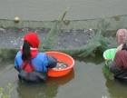 长期出售各品种鱼苗和娃娃鱼