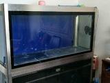专业龙鱼缸1.8米