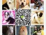 中国最大的宠物犬养殖基地 品种最全 包健康 官方担保