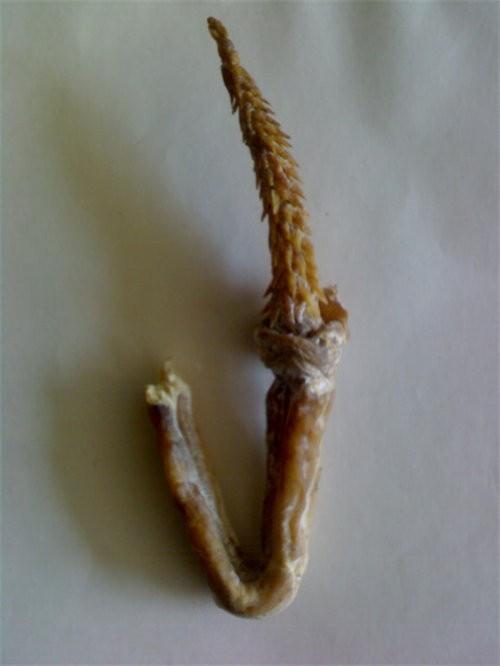 哈鞭是什么意思图片_虎鞭是什么