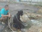 郑州市污水管道疏通,雨水井检测,封堵管口