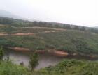 唐街:当阳城郊170亩山林出租