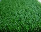 北京人工草坪厂家批发塑料草坪