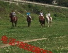 马术活动马匹买卖