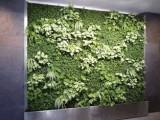 植物墻定做北京仿真植物墻安裝廠家