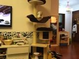 乐宠居出口型环保实木猫爬架 大型猫树通天柱猫柱子